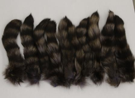Raccoon Tail - Tanned