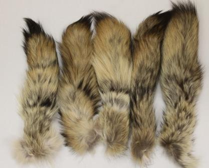 COYOTE TAILS