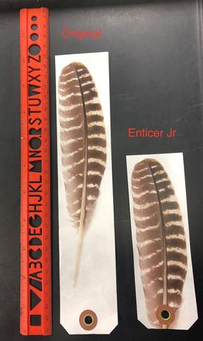 Enticer Junior - 10 Pack Feathers - Wyldwings