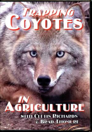 Trapping Coyotes in Agriculture - Clete's Richard Apple Road