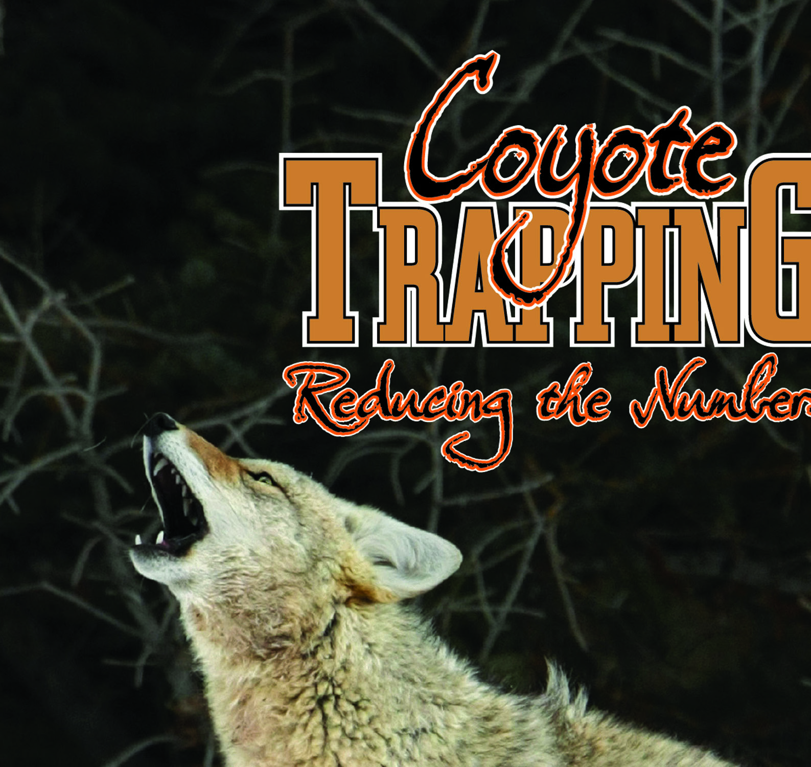 Reducing the Numbers Coyote Trapping - Mark June